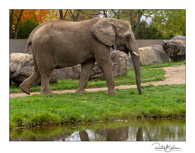 granby_zoo-181013_E-M10-PA137418-framed and sig