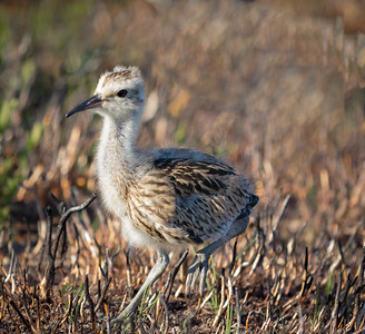 Moorland Birds