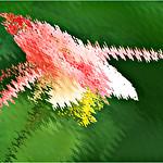Theme title:  Floral Fantasy