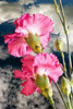 CARNATION BOUQUET 1HLCA