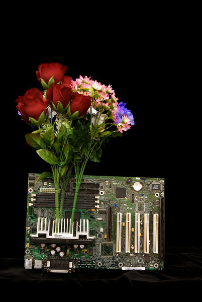MOTHERBOARD FLOWERS 1306_filtered 1A copy
