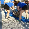 TURTLE REMOVAL