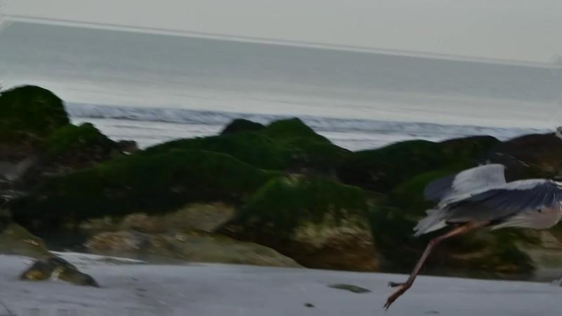 TUES BEACH WALK