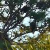 DAY 16 mon eag nest