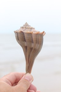 Seashell Estero Beach FL IMG_4639 CR2