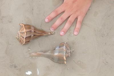 Seashell Estero Beach FL IMG_4635 CR2