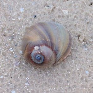 Seashell Estero Beach FL IMG_4626 CR2