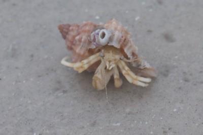 Seashell Estero Beach FL IMG_4064 CR2