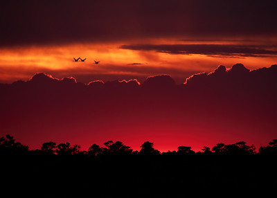 Sunset at Viera Wetlands