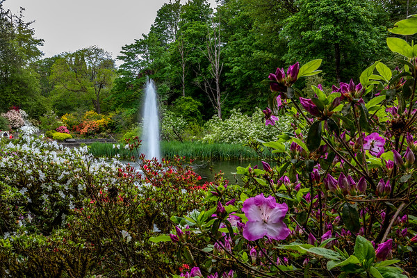 With only one month to go before Spring in a winter where the groundhog saw his shadow, my mind is racing forward to the next season.  I'm recalling the abundance of floral delights in Portland's Crystal Spring Rhododendron Garden and looking forward to this kind of scene again.  ISO 50, f/22, 35mm, .6 sec. Focus stacked.   #portland #pdx #oregonexplored #traveloregon #pnwonderland #upperleftusa #portlandnw #portlandoregon #exploreoregon #exploregon #oregonnw #portlandia #travelportland #pdxnow #Spring #gardens #botanical #flowerstalking #pnwcollective #ripcity #pnwdiscovered #1859oregon #jj_oregon #backyardbend #oregonnw #oregonofusa #outinoregon #naturaloregon #flowerstagram #flowersofinstagram