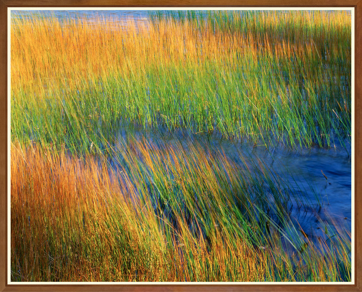 Reeds, Wind and Water II