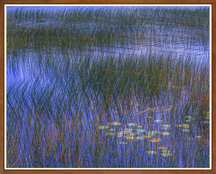 Crossed Reeds & Blue Water