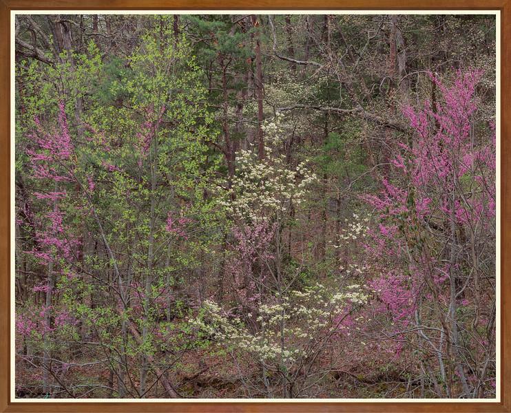 Redbud & Dogwood