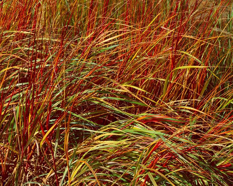 Rainbow Grass