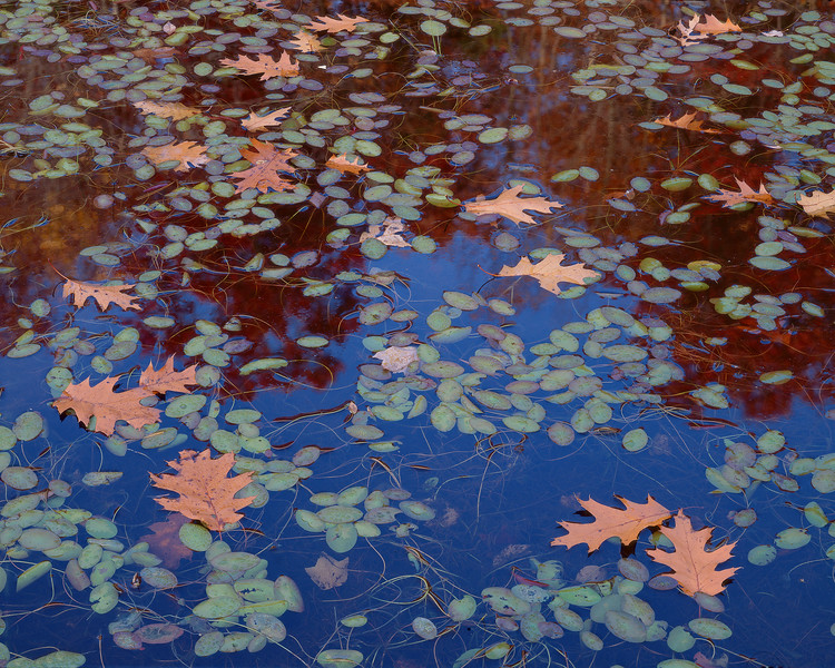 Water-shields And Oak Leaves II
