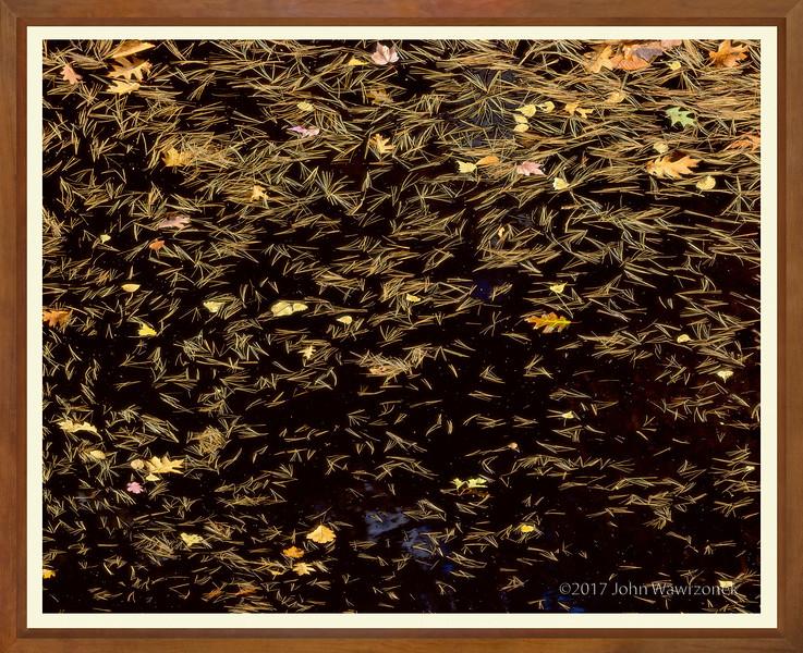 Black Water And Pine Needles II