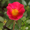 Sri Aurobindo's compassion / Сострадание Шри Ауробиндо