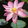 Avatar Lotus - Auroville Birthday 28.02.16 at Savitri Bhavan / Аватар - лотос - День рождения Ауровиля - Савитри Бхаван