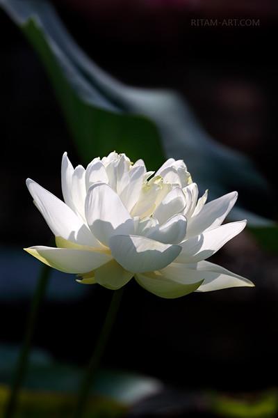 Aditi — the Divine Consciousness / Адити — Божественное Сознание