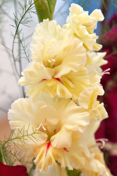 Receptivity - Gladiolus Xhortulanus flower
