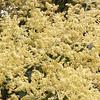 Nature's hope for realization - Mangifera indica flower