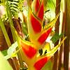 Bird of paradise/ Райская птица