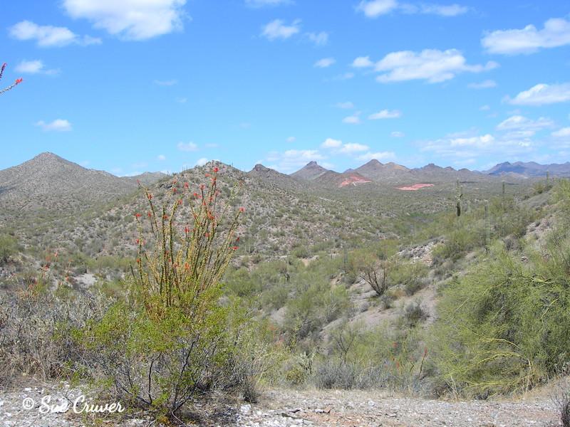 Sonoran Desert Hills and Cactus