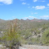 Sonoran Desert Hills and Cactus