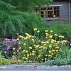 Groot Constantia Garden