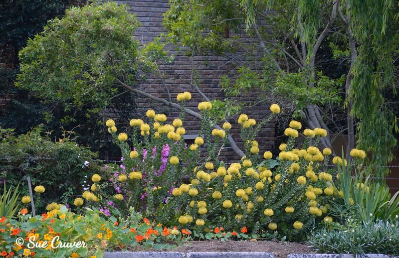 Groot Constantia Garden Mix