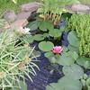Water Garden Flora