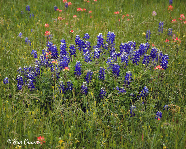 Bluebonnet Bouquet