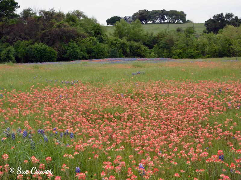Wildflower Season