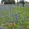 Texas Field Flowers