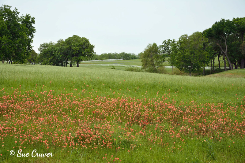 Field of Green and Red