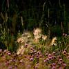 Prairie Grasses and Plants