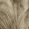 Prairie Grasses and Plants