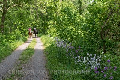 Flowers & Horses