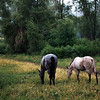 It is the end of the day at the Pass, horses heading out for night feed, a soft rain is coming down, and all is well.