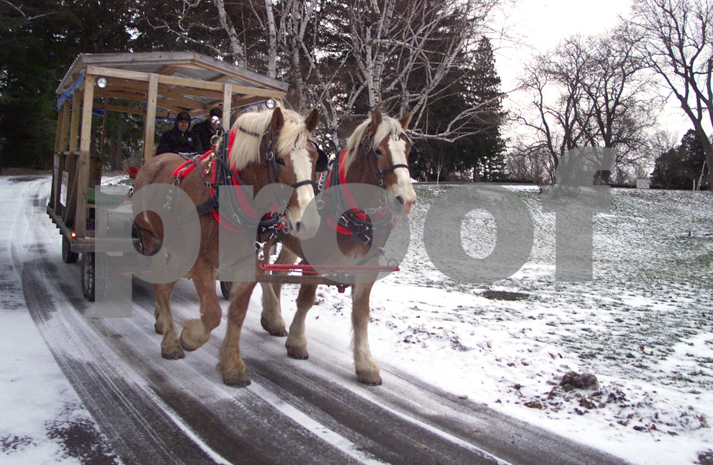 Mack 3. Ken Mack, 64, and his son Scott, 35, of Middlesex, drive a wagon pulled by two Belgian Draft horses at Sonnenberg Gardens. They have been driving wagons at Sonnenberg for the past three years. The horses, acquired in October of 2002, are named Jim and Don and stand over six feet tall. <br /> 1/1/03 50 Plus