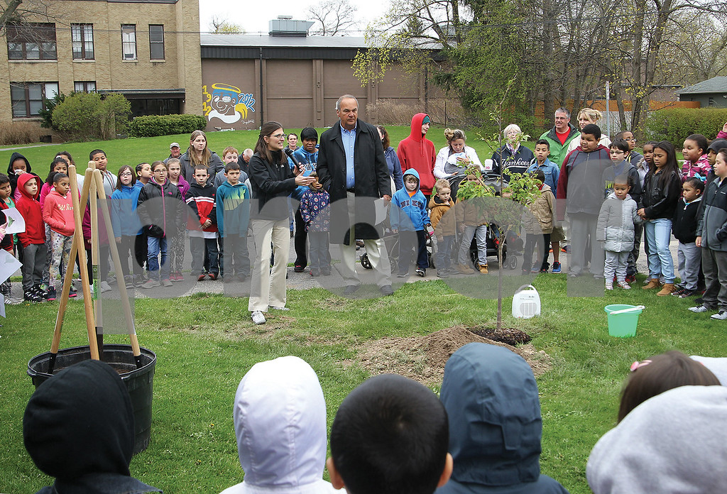 Spencer Tulis / Finger Lakes Times<br /> The city Shade Tree Committee celebrated Arbor Day Friday with two tree plantings the first on the lawn of St. Francis-St. Stephen's School on High Street where a  Yoshino Cherry tree was planted then at 305 Washington St. with the planting of an American Hornbeam and two Red Horse Chestnut trees along South Morrell Avenue. Leading the celebration from the city were Sage Gerling and Mayor Ron Alcock.