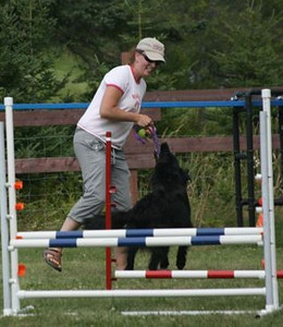 The Flying High Workshops are all about Games, Grids, Skills and Obstacle Performance, with an underlying theme of relationship building, maintaining connection, and team work.  Designed to provide a solid foundation for your agility dog (and/or family pet), these workshops are jam-packed and fun.