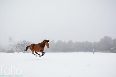 Horse in Winter Fog, Pownal, Maine