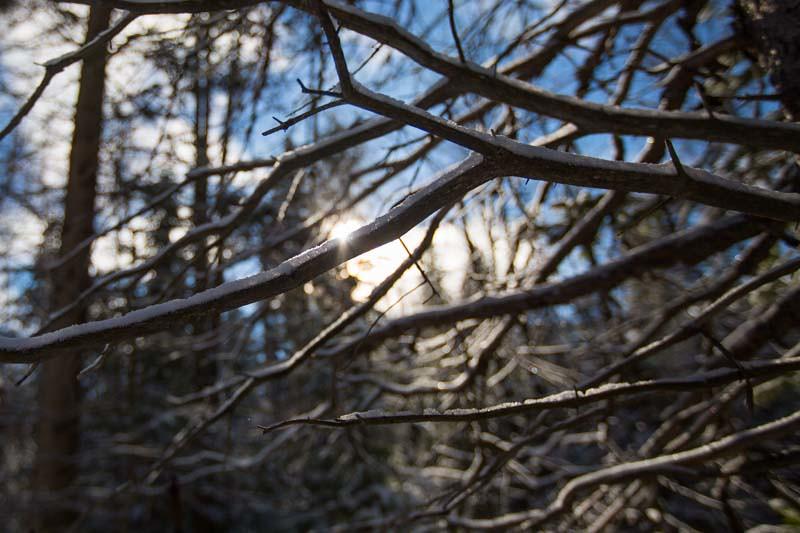 WinterPostcard-6
