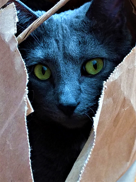 """ROZ BACHMAN - """"DON'T LET THE CAT OUT OF THE BAG"""" - NATURE"""