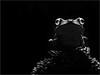 """WAYNE KLIEWER - """"MOONLIT GLADIATOR TREE FROG"""" - NATURE"""