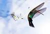 "LEE LEVIN-FRIEND - ""THE HUMMINGBIRD"" - NATURE"