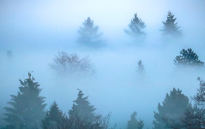 TREES IN FOG 2