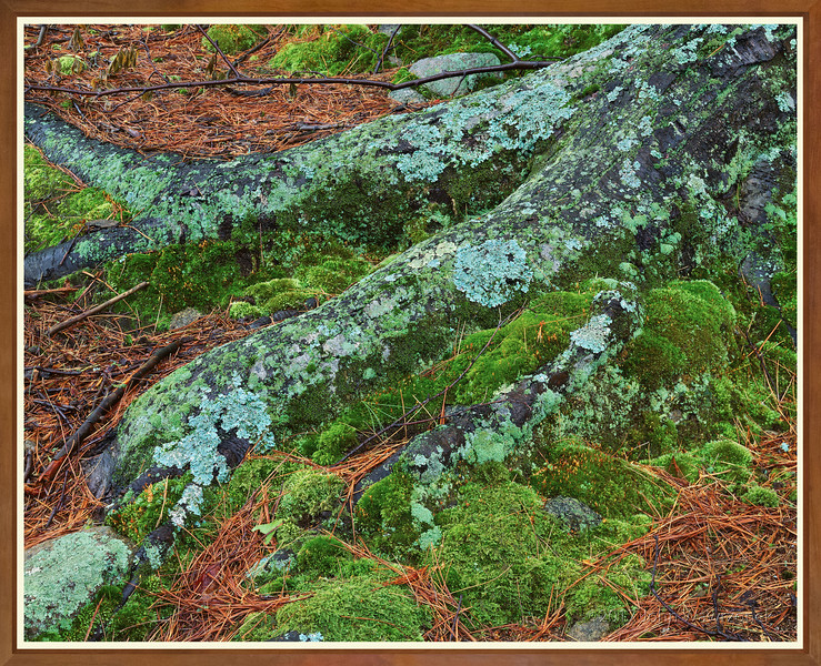 Roots, Lichens & Moss