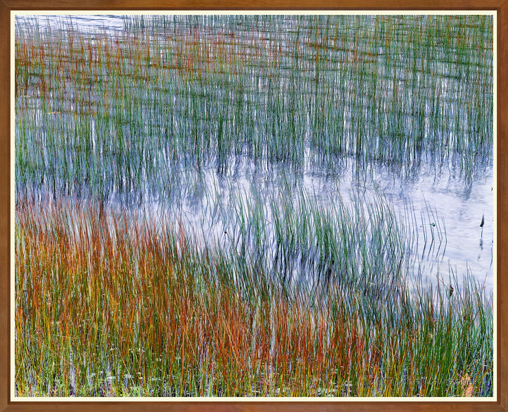 Reeds, Wind and Water III